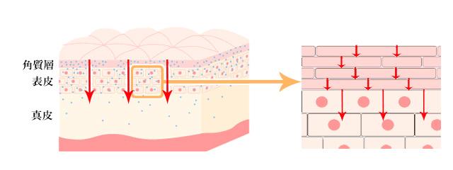 肌への通過性、浸透性